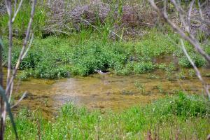 Ruta Encina de Ruli - Senda verde río Záncara.11