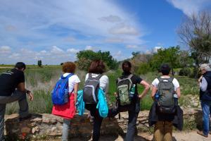 Ruta Encina de Ruli - Senda verde río Záncara.14