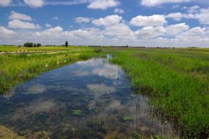Ruta Encina de Ruli - Senda verde río Záncara.15