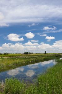Ruta Encina de Ruli - Senda verde río Záncara.17