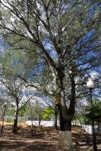 Ruta Encina de Ruli - Senda verde río Záncara.3