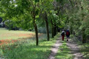 Ruta Encina de Ruli - Senda verde río Záncara.8