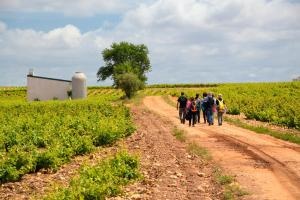 Ruta Encina de Ruli - Senda verde río Záncara.22