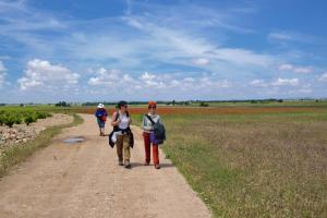 Ruta Encina de Ruli - Senda verde río Záncara.29