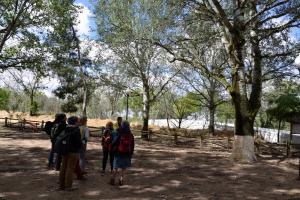 Ruta Encina de Ruli - Senda verde río Záncara.4