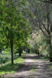 Ruta Encina de Ruli - Senda verde río Záncara.5