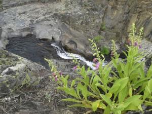 Casa Encendida. Salida Campillo de Ranas – Matallana.31 mayo 2014