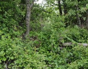 La Ruta del Bio – Bosque