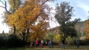 Nogal de Horcajo de la Sierra