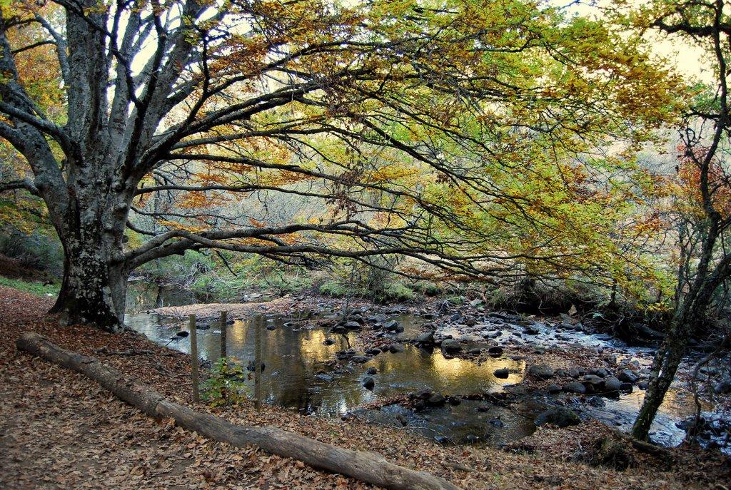 Bosque El Chaparral