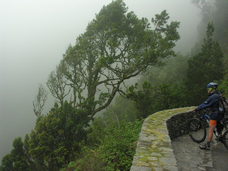 Una selva bañada por la niebla