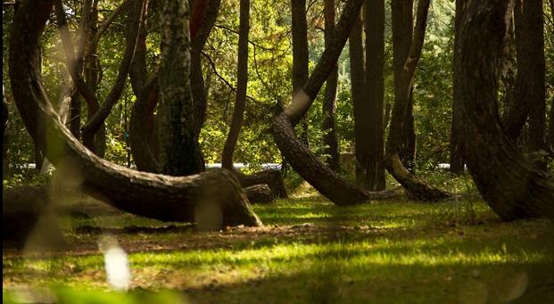 """Es recomendable si se decide visitar este bosque informarse bien sobre cómo llegar ya que se encuentra escondido entre árboles """"normales"""" y no se distingue desde la ruta principal."""