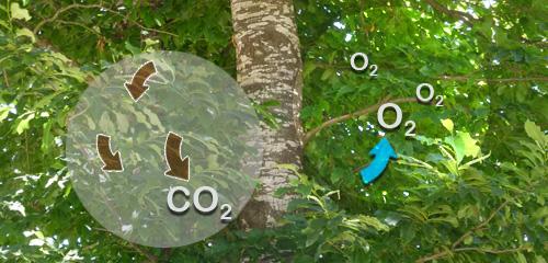 ciclo-co2-o2