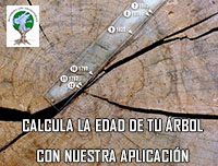 Nuestra aplicacion para medir tu árbol  y calcular su  edad