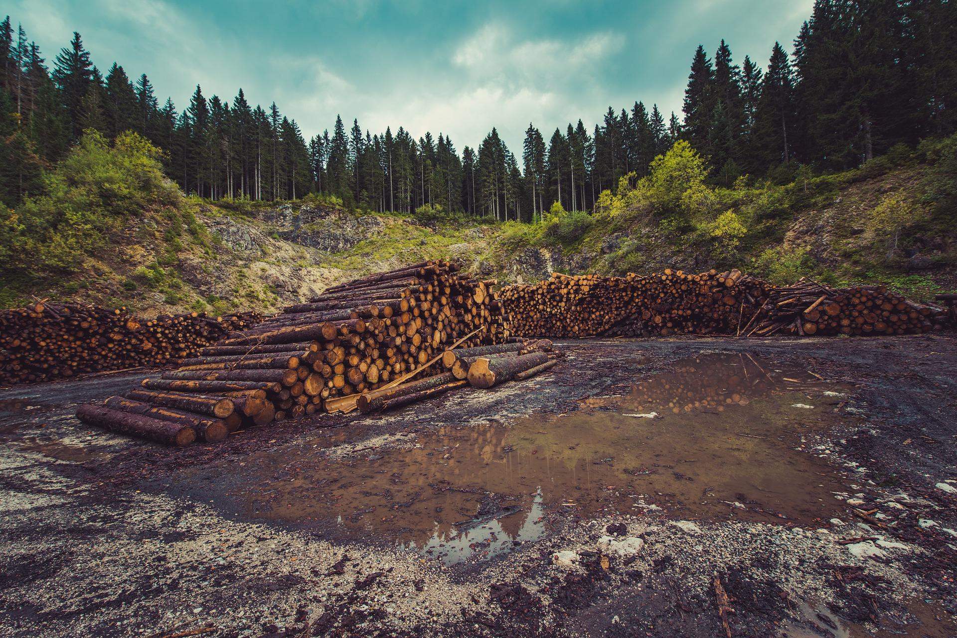 Deforestaci n cu ntos rboles son talados cada a o en for Cuanto miden los arboles